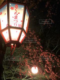 桜,夜,屋外,ランタン,ランプ,イベント,照明,祭り,明るい,点灯,まつり