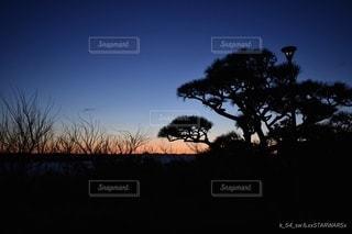 暗闇の中の木の写真・画像素材[3403604]