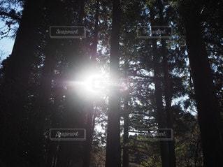 自然,空,森林,屋外,太陽,日光,光,樹木