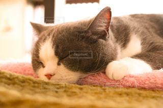 猫,動物,屋内,かわいい,昼寝,ペット,休憩,寝る,人物,癒し,ネコ