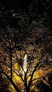 公園,花,春,桜,木,ピンク,黄色,夜桜,オレンジ,サクラ,樹木,電気,ライトアップ,街灯,草木,3月,迫力,4月,今だけ
