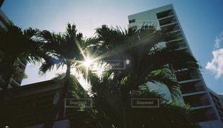 空,屋外,太陽,光,樹木,リゾート,リゾート地,草木