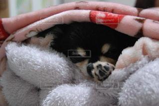 犬の写真・画像素材[2945625]