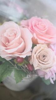 バラのクローズアップの写真・画像素材[2961914]