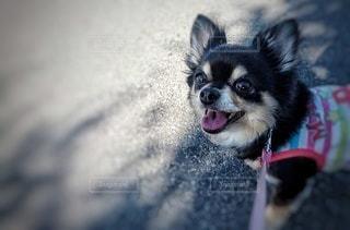 犬の写真・画像素材[3013990]