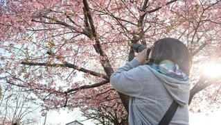 女性,1人,30代,風景,空,花,春,カメラ,桜,木,屋外,ピンク,太陽,青,花見,撮影,樹木,お花見,人,イベント,日射し,草木,3月,さくら,ブロッサム