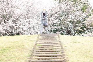岡の上に咲く桜の写真・画像素材[3057667]