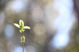新芽の写真・画像素材[3144530]