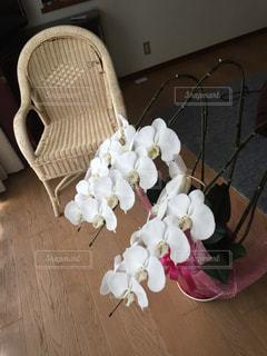 胡蝶蘭の写真・画像素材[2967012]