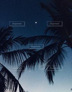 ヤシの木くの写真・画像素材[3371876]