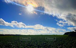 空,太陽,雲,景色,光,草,新緑,高原,草木