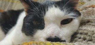 猫,動物,白,黒,ペット,目,ネコ