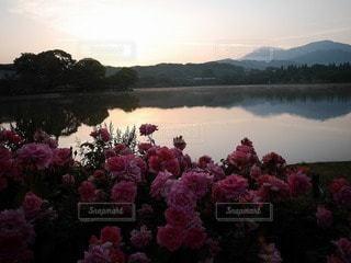 自然,風景,空,屋外,湖,バラ,水面,景色,鮮やか,薔薇,朝焼け,草木,静かな,日の出前