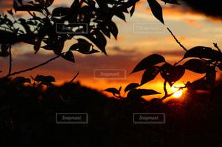 自然,空,太陽,夕暮れ,光,樹木