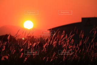 夕日の写真・画像素材[2882343]
