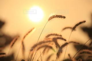 夕暮れの草原の写真・画像素材[2888070]