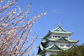 名古屋城の写真・画像素材[3037276]