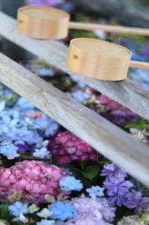 紫陽花の手水舎の写真・画像素材[3433180]
