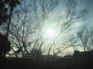 風景,空,冬,木,屋外,太陽,シルエット,光,樹木,日中