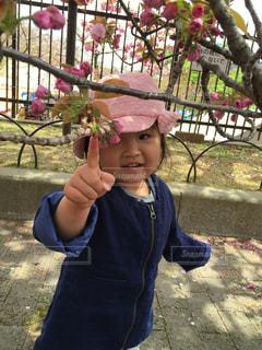 桜の通り抜けの写真・画像素材[2938792]