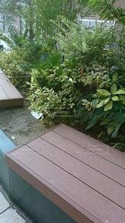 庭の木製のベンチの写真・画像素材[2874493]