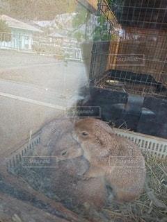 ケージの中の小さな動物の写真・画像素材[2908787]
