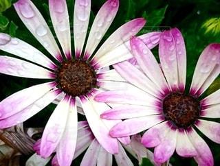 花のクローズアップの写真・画像素材[3485180]