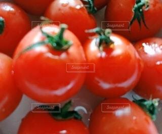トマトのクローズアップの写真・画像素材[3665863]