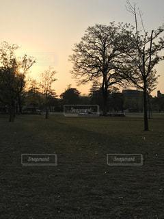 空,公園,太陽,夕暮れ,光