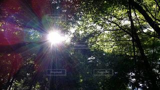 森の眺めの写真・画像素材[2864347]