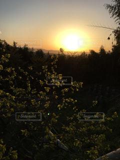 自然,空,太陽,夕暮れ,光,樹木,草木