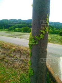 電柱に蔦の写真・画像素材[3207483]