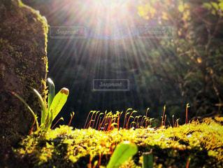 自然,空,太陽,葉,光,芽,草木,新芽