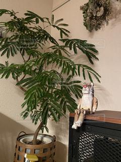 トラと観葉植物の写真・画像素材[2944723]