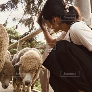 羊をかわいがっている女性の写真・画像素材[2956223]