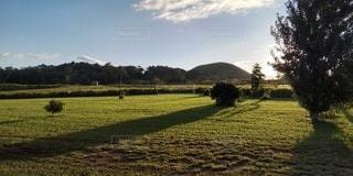 緑豊かな畑で放牧する牛の群れの写真・画像素材[2874732]