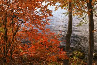 自然,風景,空,秋,紅葉,屋外,湖,太陽,水面,葉,オレンジ,光,樹木,カエデ