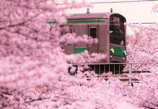 空,桜,太陽,光,満開,鉄道,車両