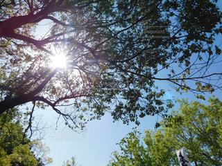 自然,空,木,屋外,太陽,日差し,光,樹木,昼間,草木