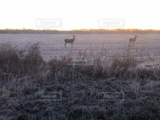 自然,風景,空,動物,太陽,アメリカ,光,草,鹿,オクラホマ州