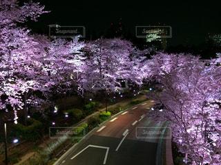 風景,花,春,桜,花見,景色,サクラ,イベント,桜の木,さくら,ブロッサム