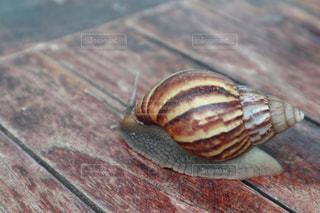 木目のテーブルにカタツムリの写真・画像素材[2907564]