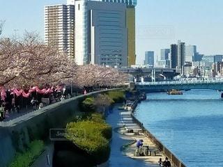 風景,空,桜,橋,晴天,川,テラス,水面,桜並木,提灯,都会,高層ビル,桜まつり