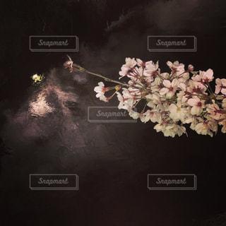 花,桜,暗い,夜桜,草木,ブロッサム