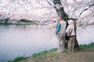家族,恋人,花,桜,屋外,水面,花見,樹木,夫婦