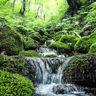 自然,風景,森林,屋外,水面,苔,岩