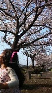 公園,花,春,桜,屋外,ピンク,青空,樹木,女のコ