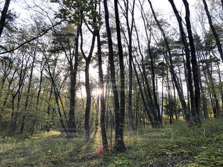 自然,空,森林,太陽,森,緑,木漏れ日,光,清々しい,森林浴,福島,心地いい,深呼吸,ありのまま
