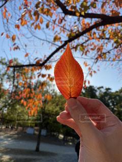 空,秋,屋外,太陽,手,光,樹木