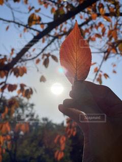 空,秋,太陽,木漏れ日,オレンジ,光,樹木,透かし